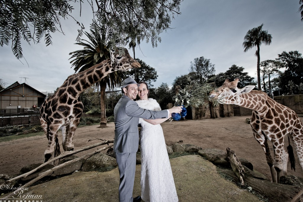 Wedding dance with giraffes